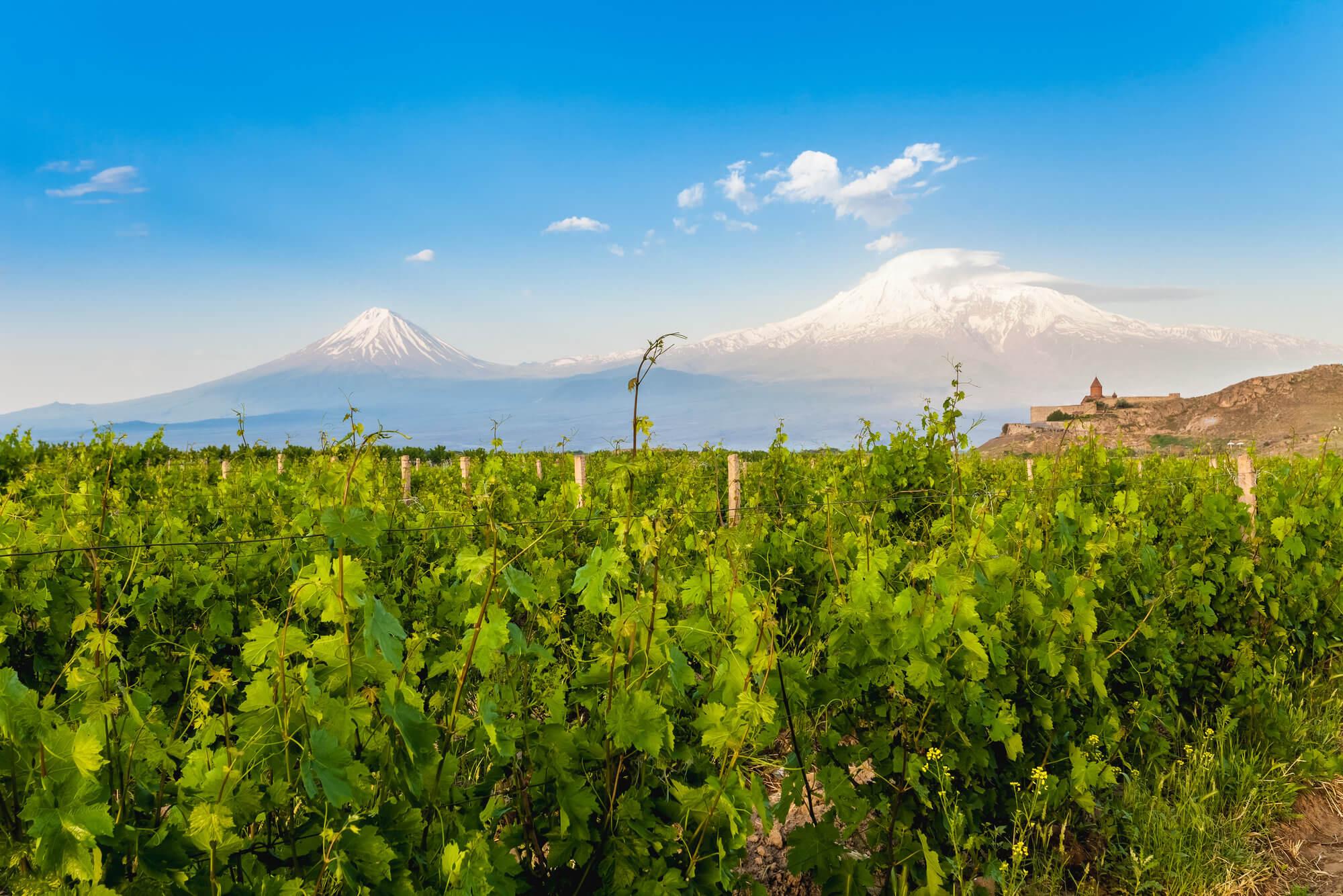 armenia-wino