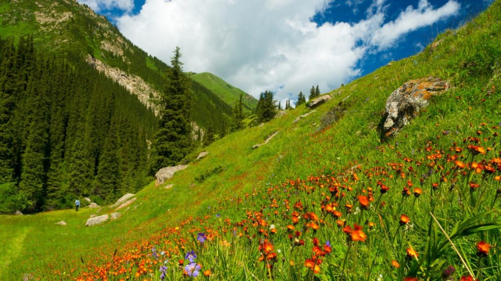 Dolina-Kwiatow