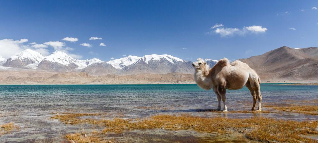 pamir-wyprawa-na-koczowiska-nomadow