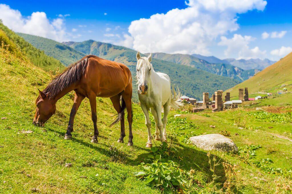 konie-na-kaukazie