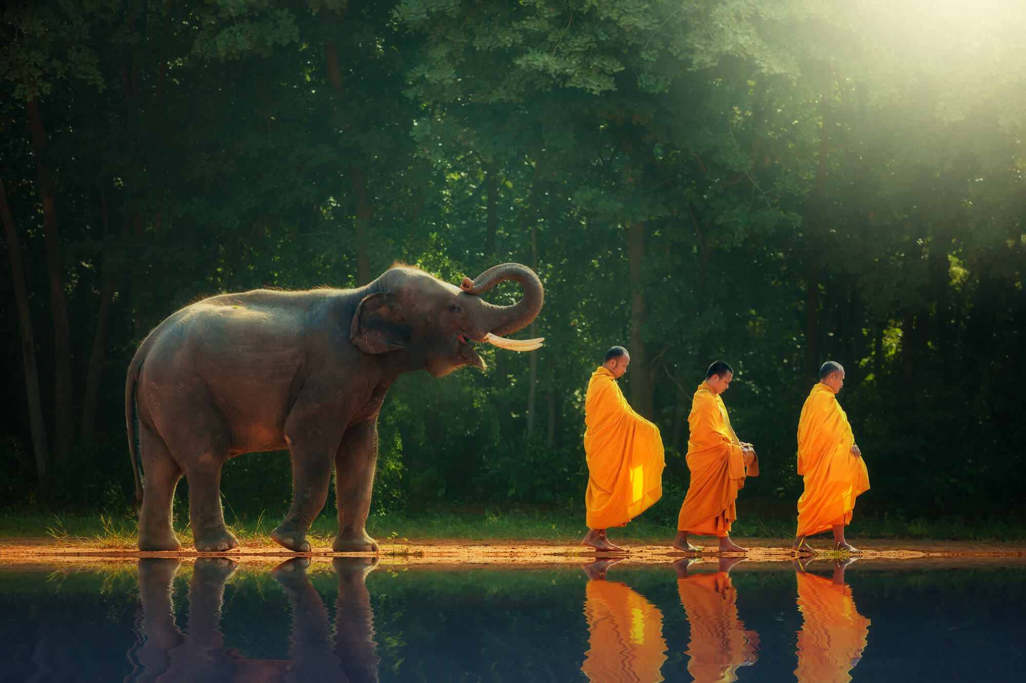 Indie-slon-mnisi