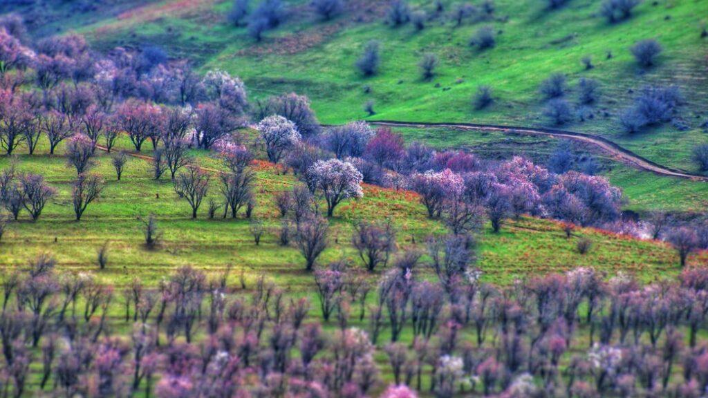 Kulturowa-przygoda-migdaly-Uzbekistan