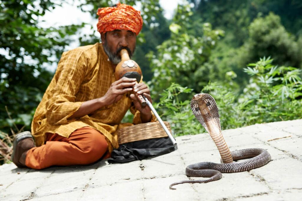 Poskramiacz-wezy-Radzastan-Indie-waz
