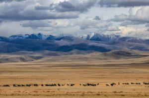step mongolia