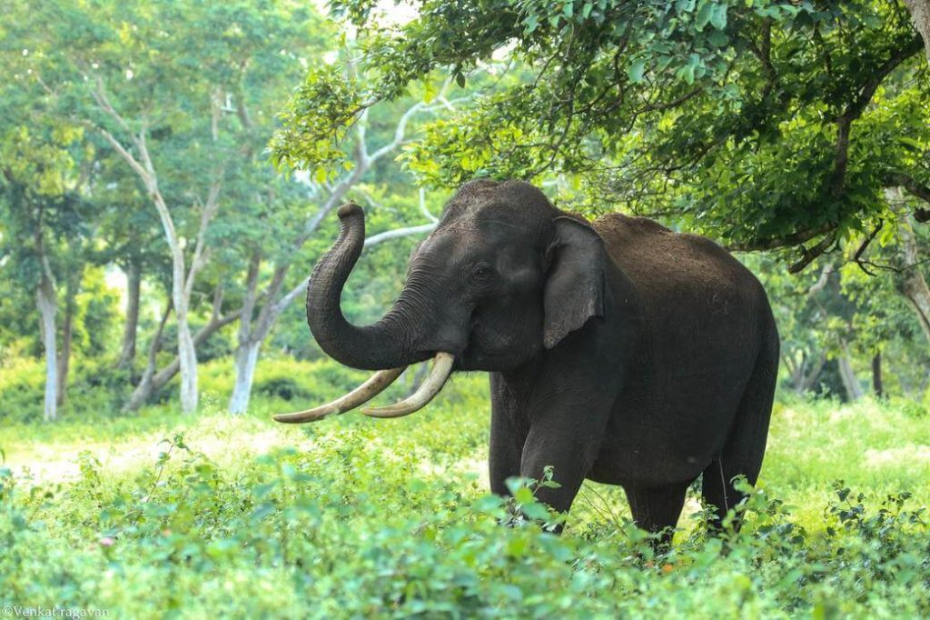 slon-sri-lanka